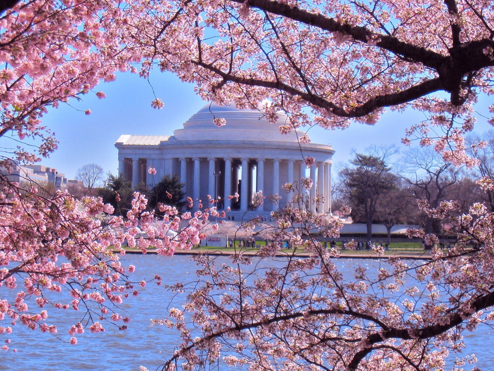 Peak Bloom: 10 Fun Facts About Cherry Blossoms