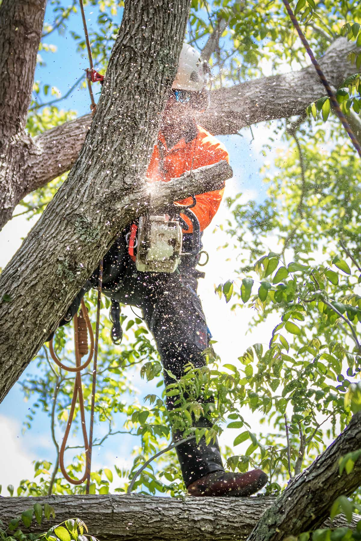 Pruning over the House: Less Can Be More
