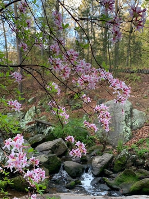 May You Bloom and Grow: Native Plant Species to Notice Now