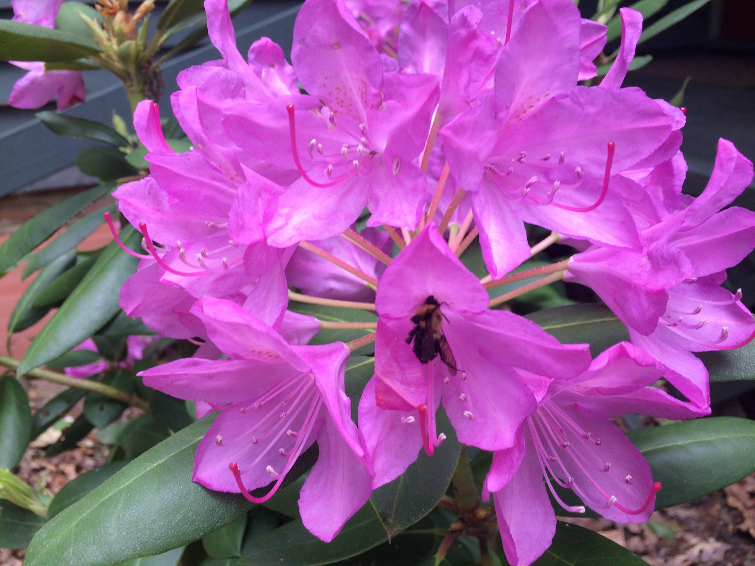 Native Shrubs and Perennials for Your Yard or Garden