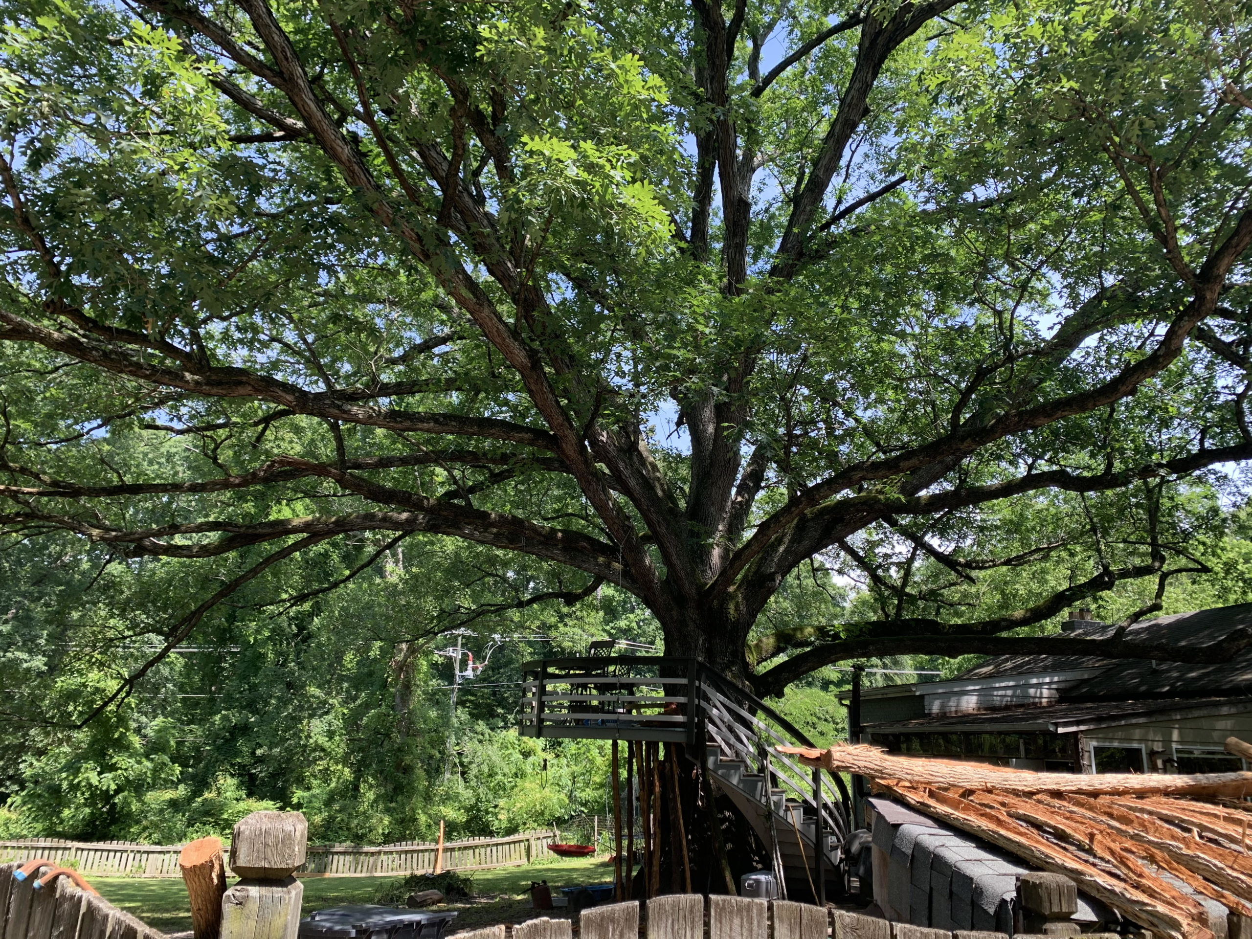 'Old Good Air' the White Oak