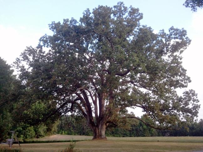 Powhatan County Post Oak