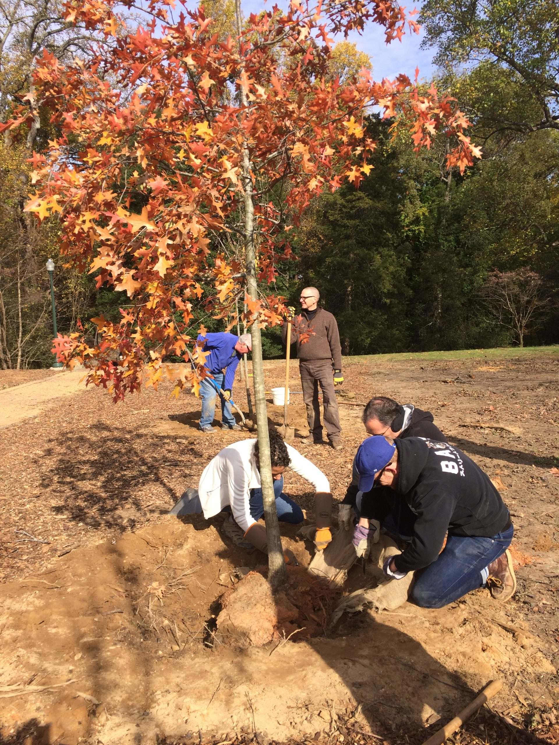 Time for a Change: Replace Bradford Pears with Native Trees