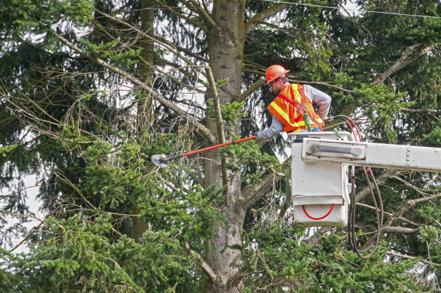 Taking an Unpopular Stance on Line Clearance and Our Trees