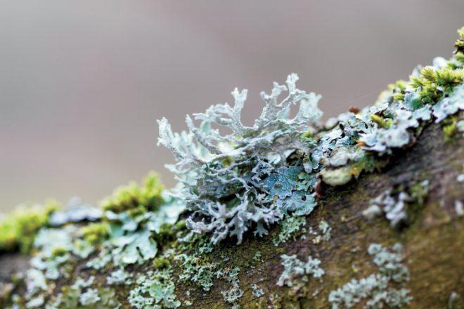 What's in a Lichen?