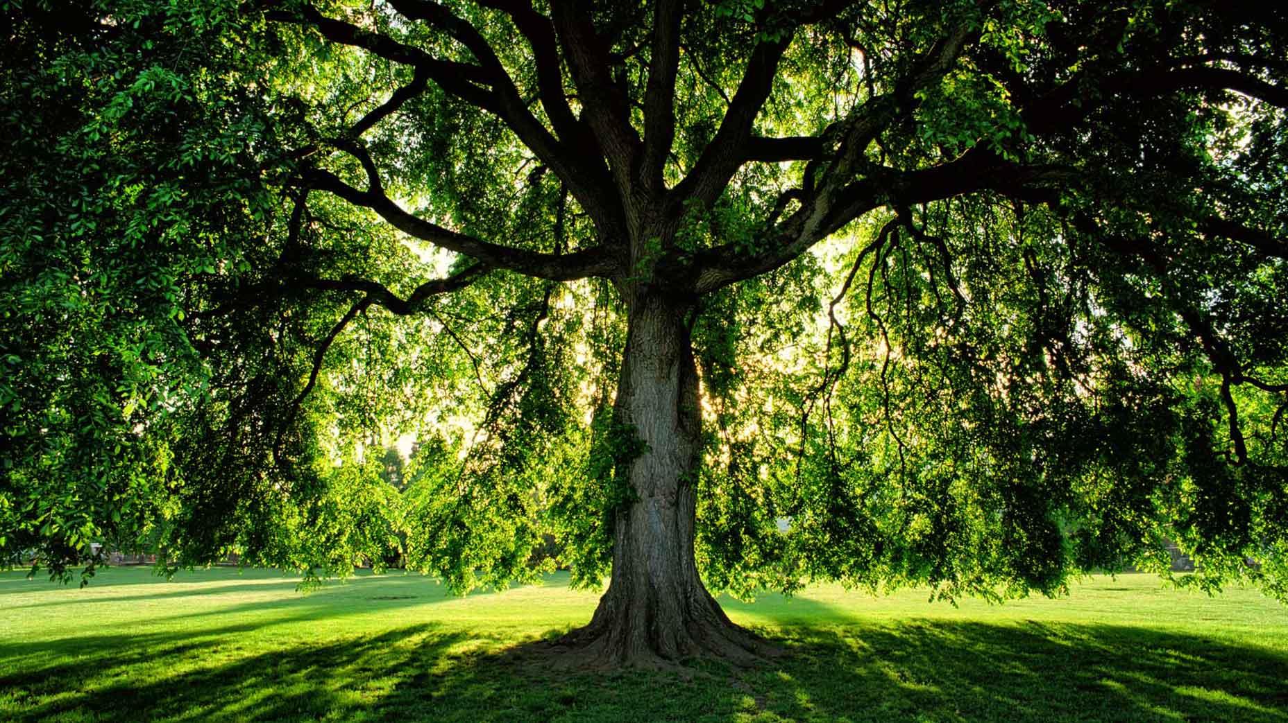 Turf Wars: Grass vs. Trees