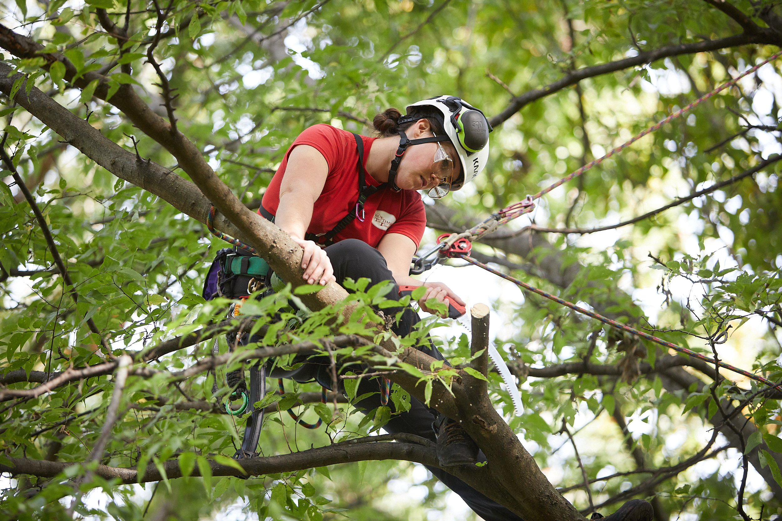 Pruning: How to Understand an Arborist