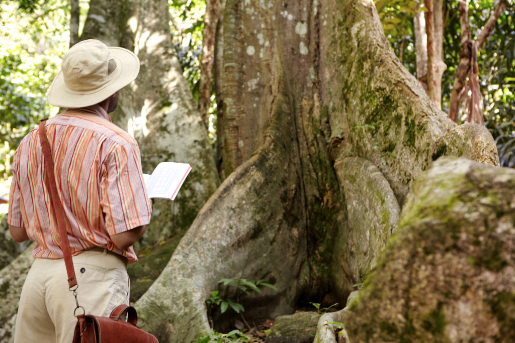 The Tree That Could Help Stop the Pandemic