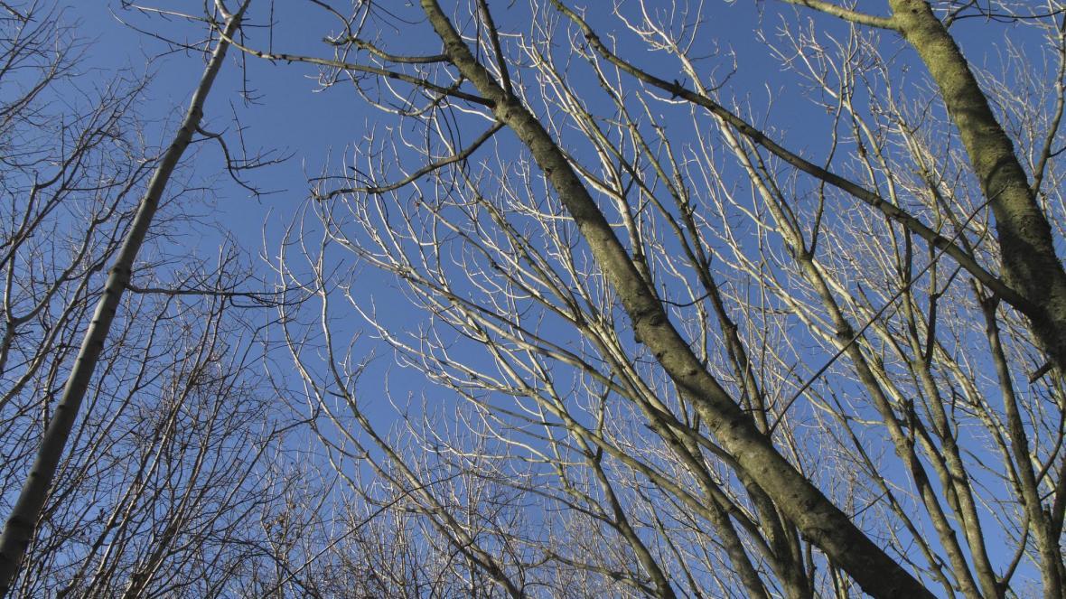 A Season for an Arborist