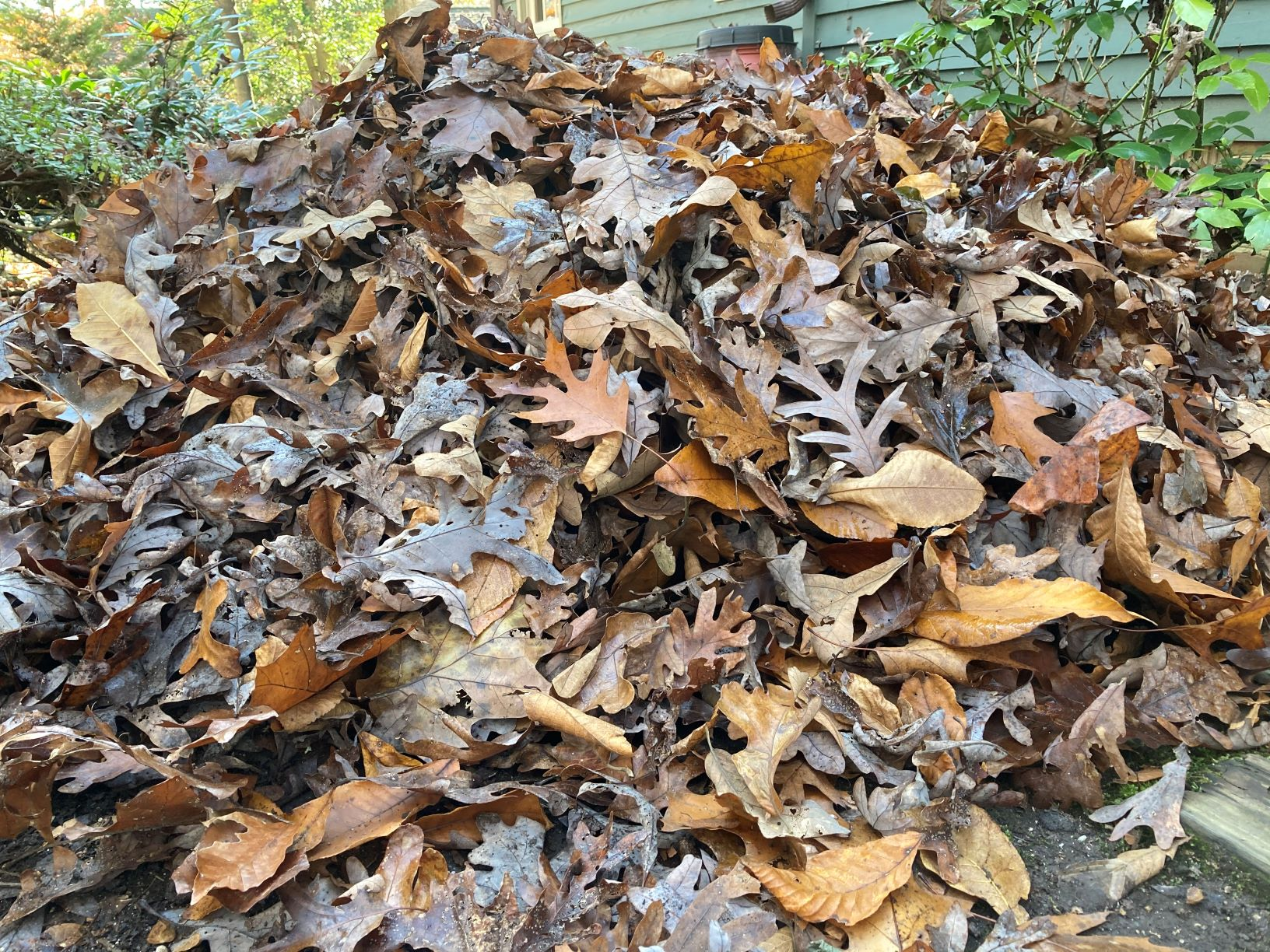 It's Called Leaf Litter, But It's Not Garbage — Six Reasons to Leave the Leaves