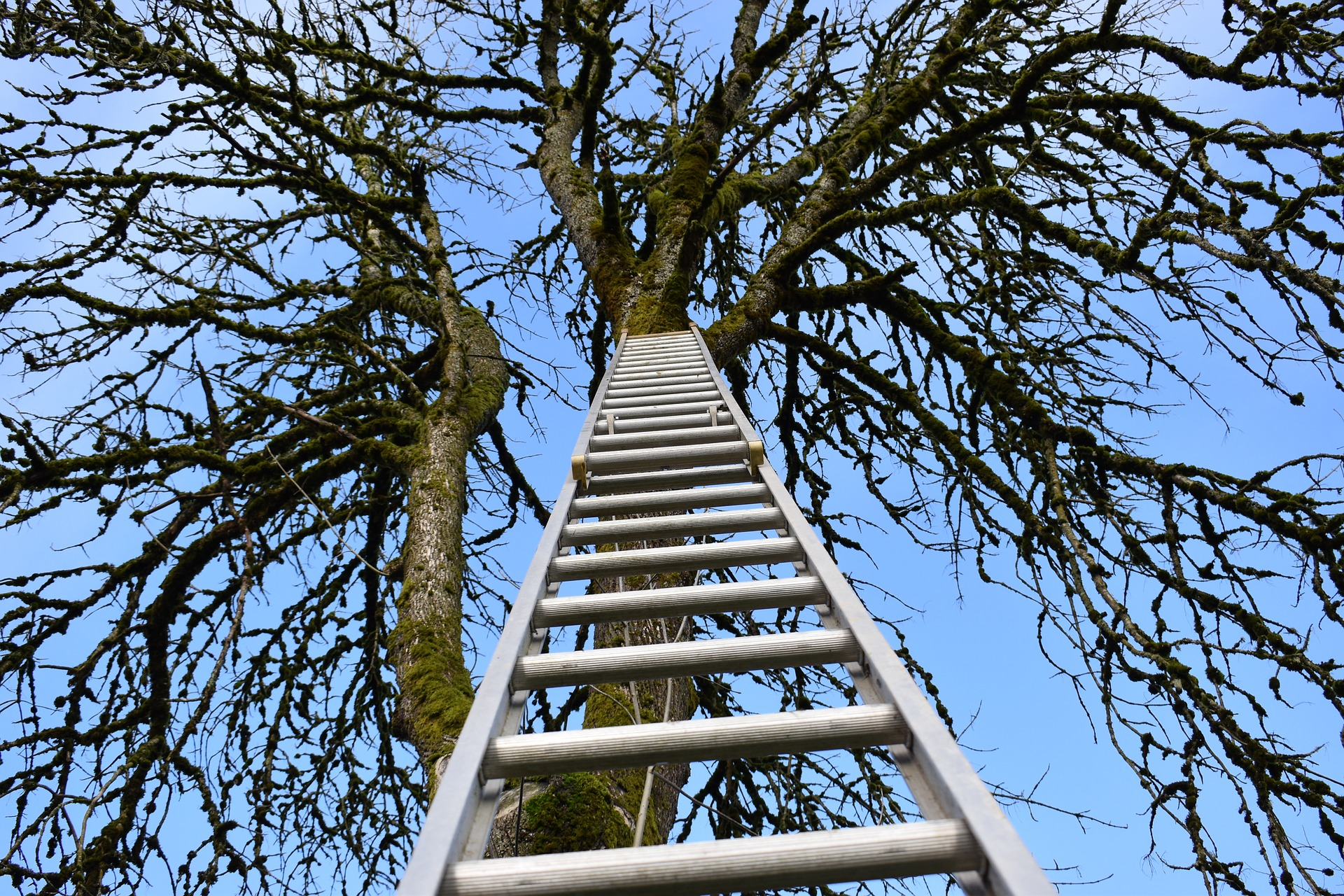 DIY Tree Work? Draw the Line at Ladders and Saws