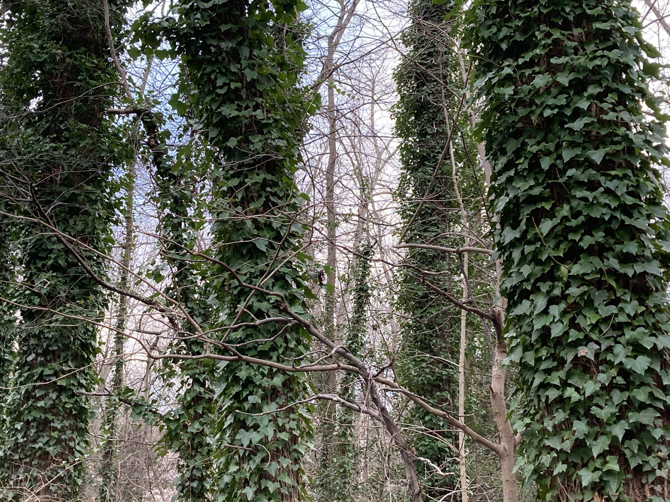 Is the Future Forested?