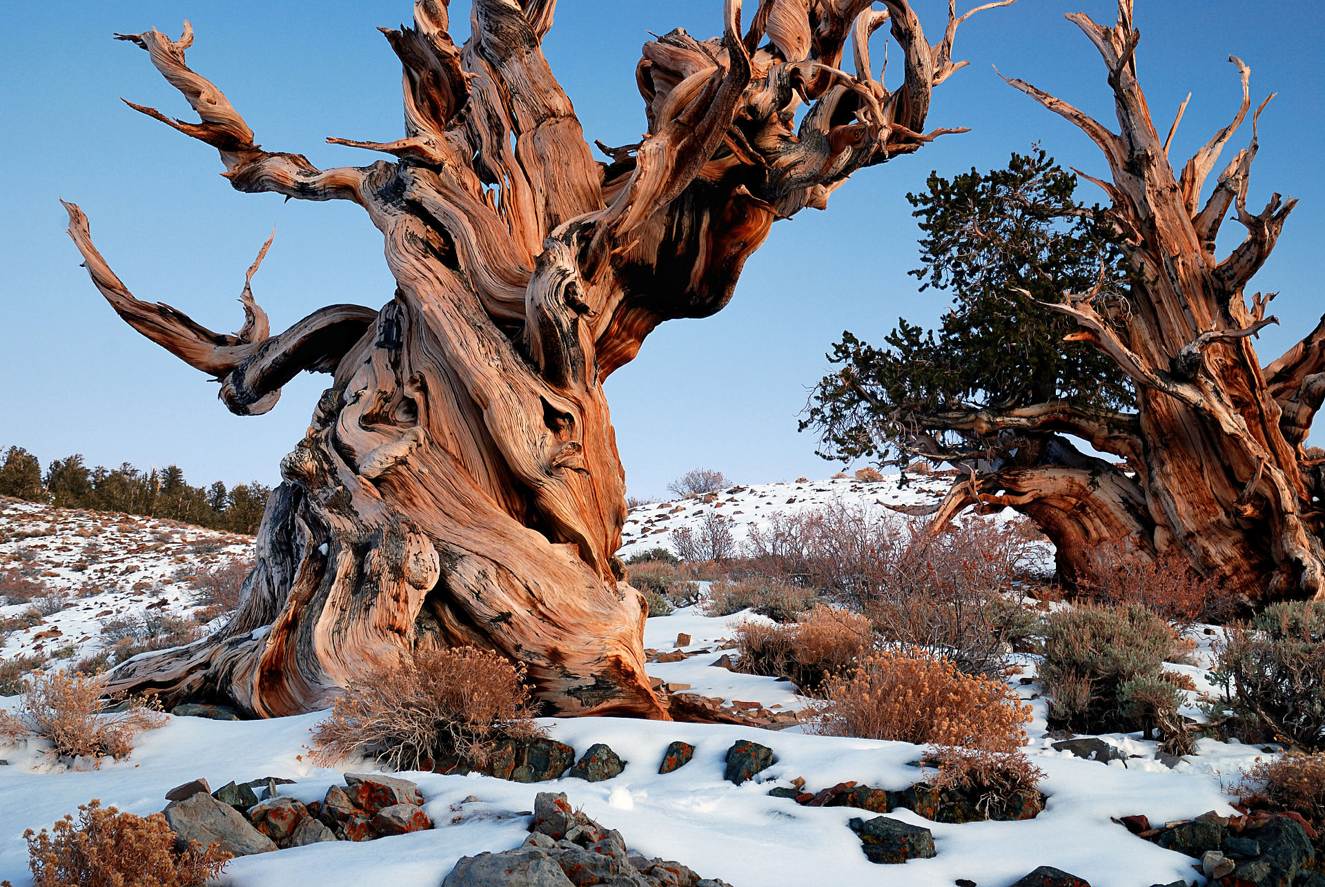 The World's Oldest Living Things: A Photographic Masterpiece