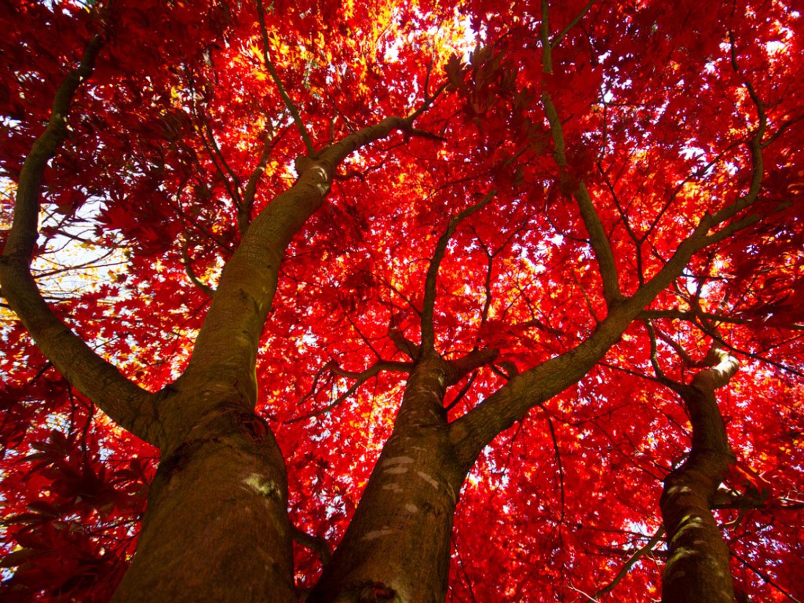 Fall Foliage: An Educated Leaf Peeper's Primer