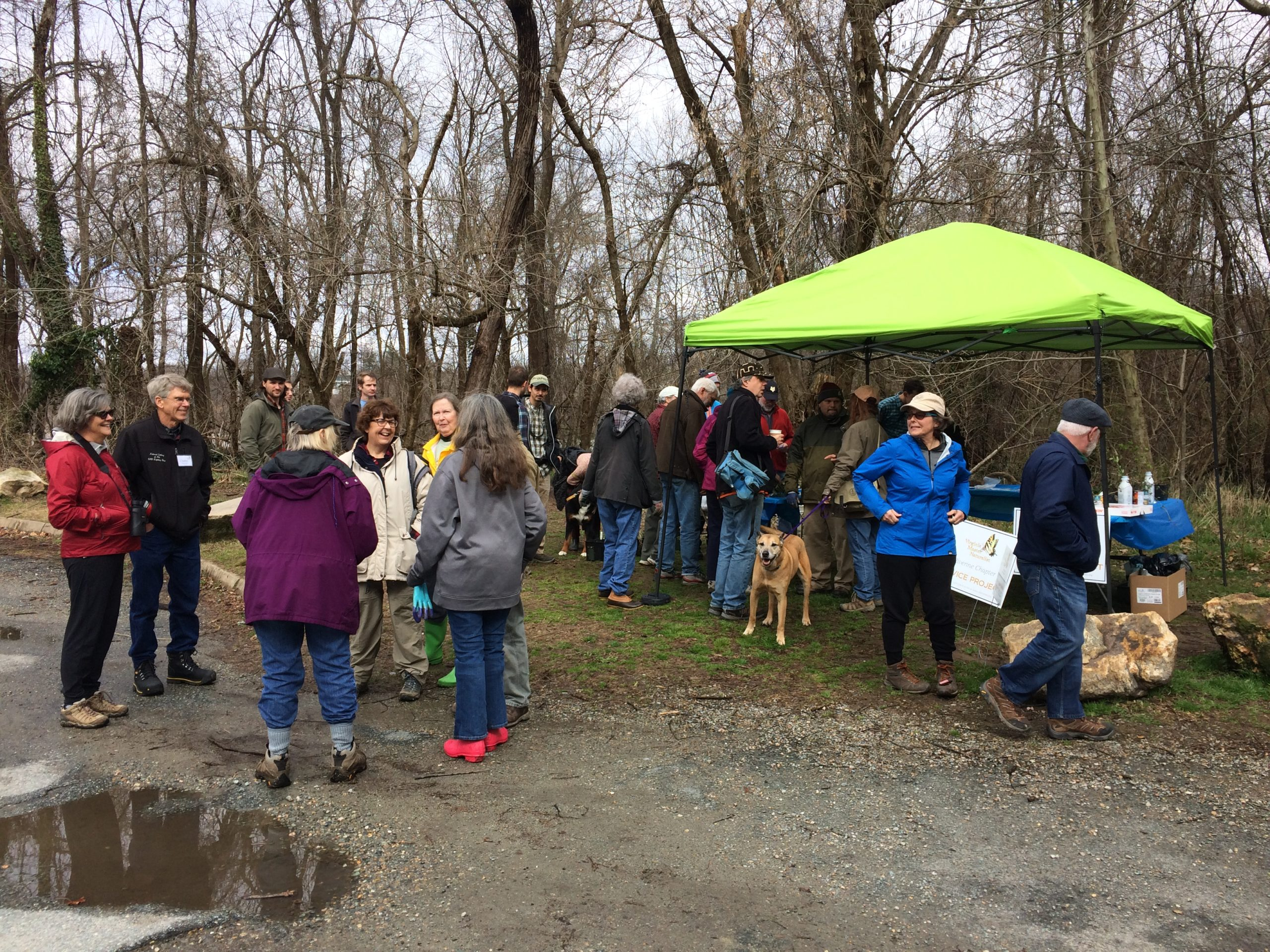 Volunteer to Save Richmond's Trees