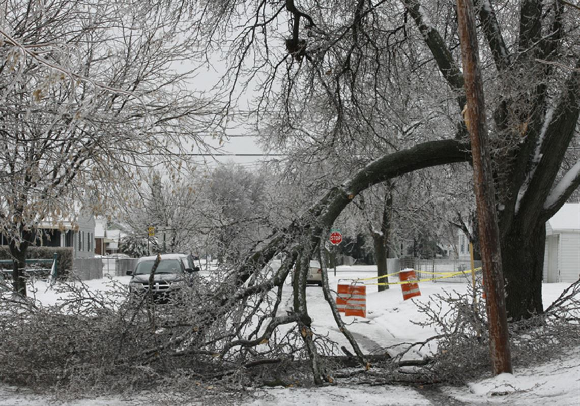DIY Post-Storm Tree Assessment