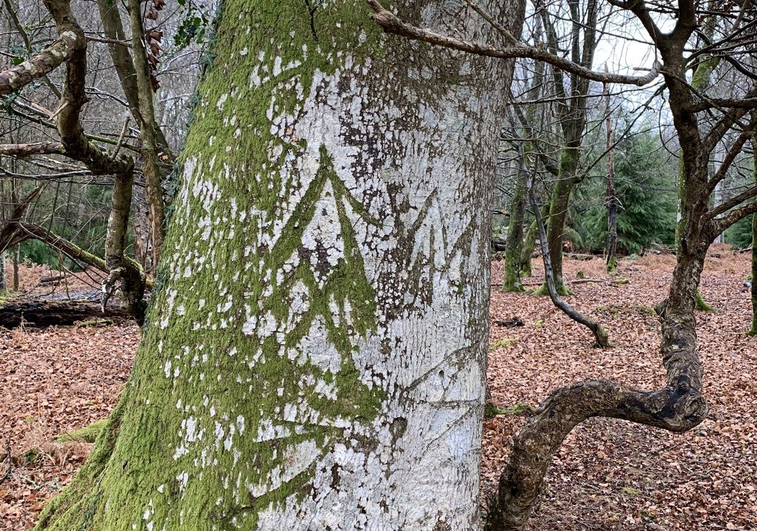 Tree Etchings, 'Witches Marks' Offer Window into Ancient England