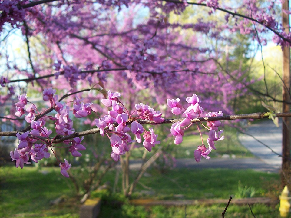 Flower Power: A Guide to Spring Tree Blooms