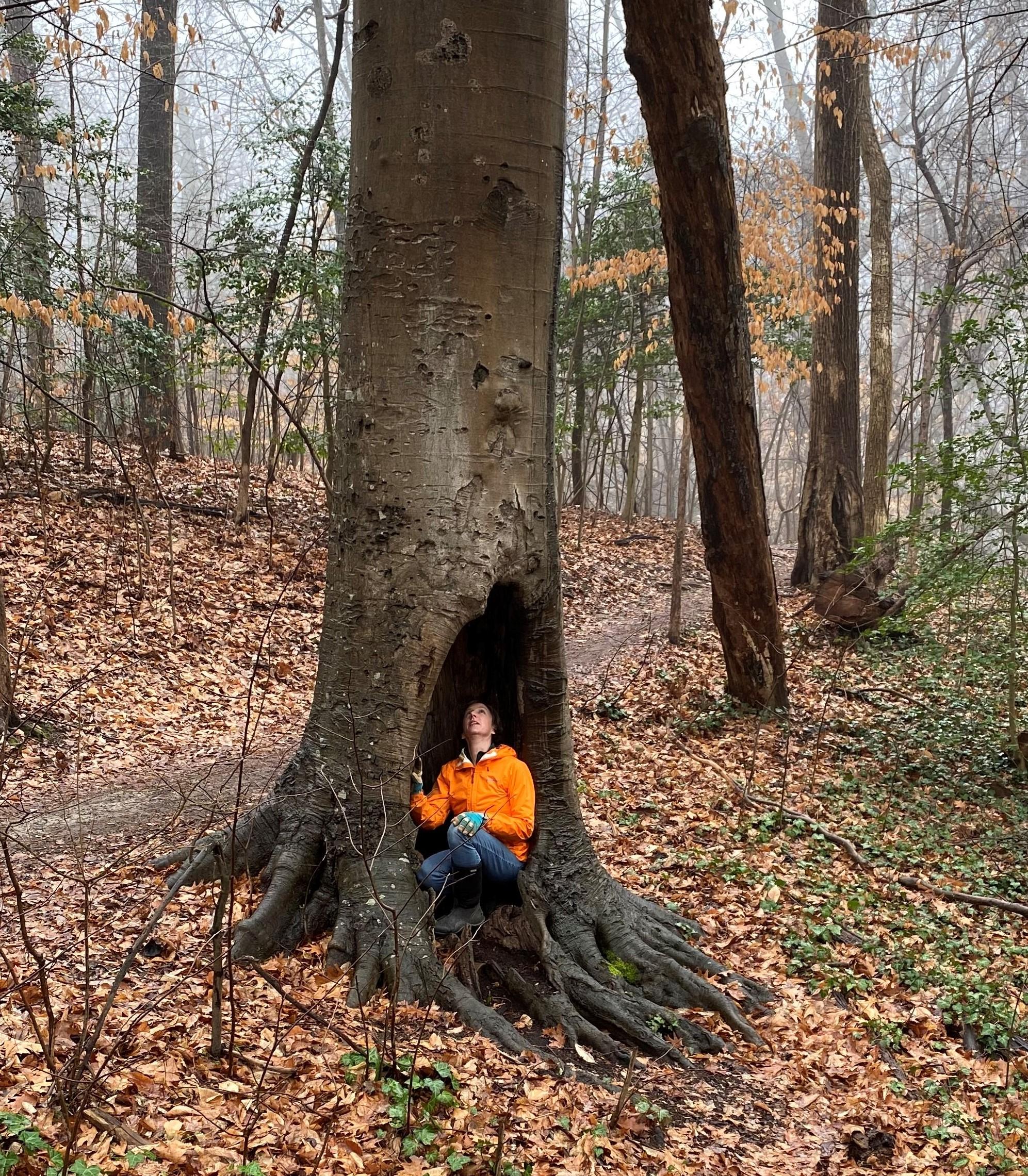A Tree's Life