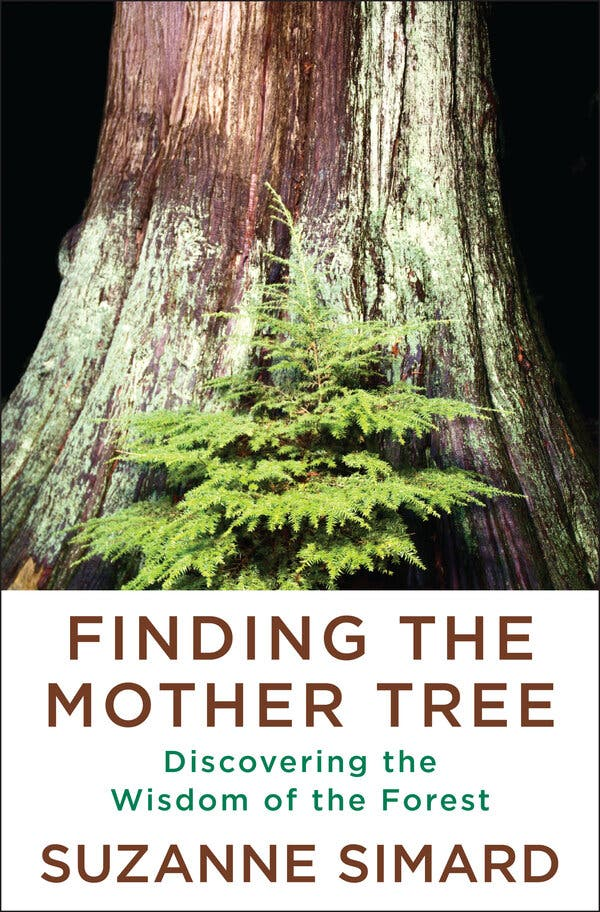 Book Review: 'Finding the Mother Tree'