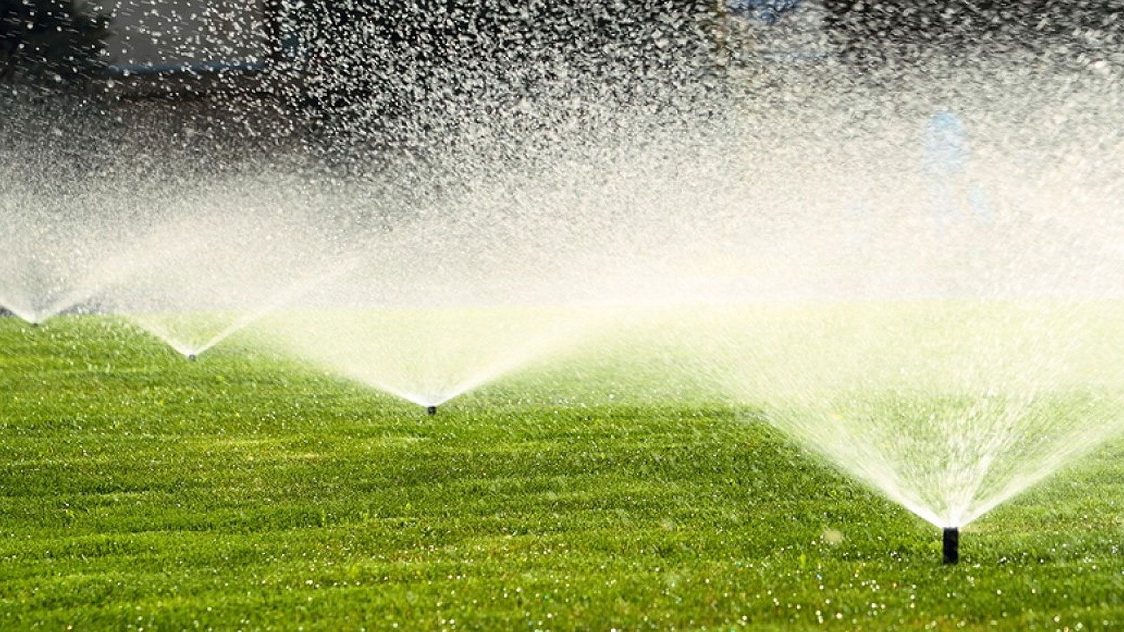 Is an Irrigation System Good for Your Trees?