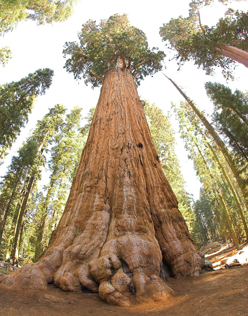 Fire Destroyed Over 10% of World's Giant Sequoias Last Year