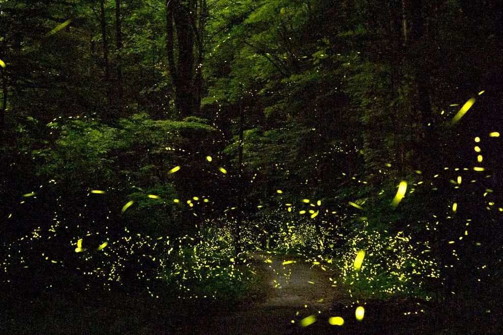 Greeting Fireflies with Gratitude