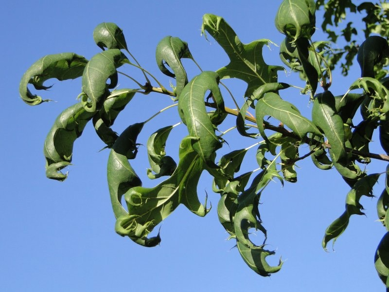 Herbicides: Kill Weeds, Not Trees