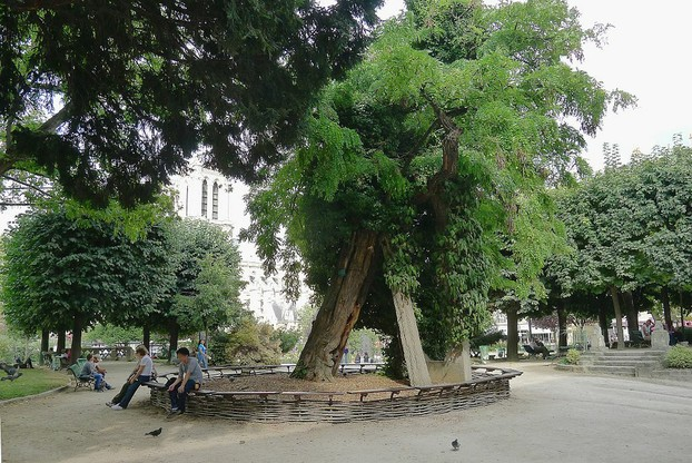What We Can Learn from Paris' Oldest Tree