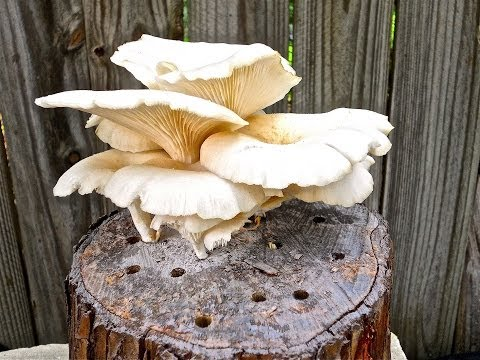 Sharondale Farm Offering Grow-Your-Own Mushroom Workshops