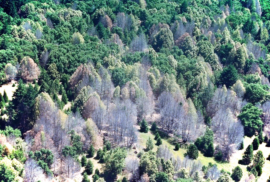 Oregon Is Burning Trees in Order to Save Them